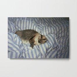 sleeping creature Metal Print