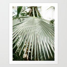Botanical garden close up | Palm leaf detail | Fine art photography print Art Print