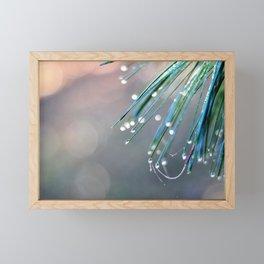 Dew drops on white pine Framed Mini Art Print