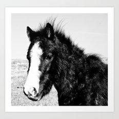 Mini Horse (2) Art Print