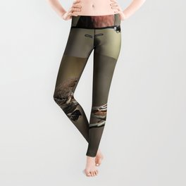 House Finches Dating Leggings