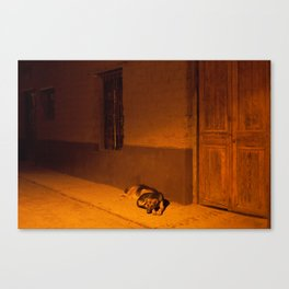 Street Dogs Canvas Print