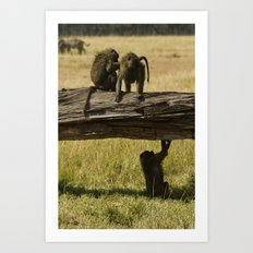 Olive Baboons Art Print