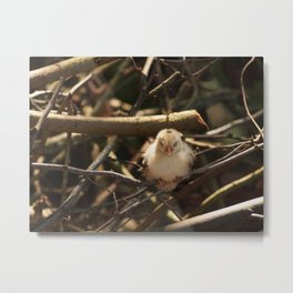 Tired Chick Metal Print