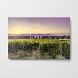 grapevine field Metal Print
