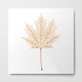 Maple leaf skeleton Metal Print