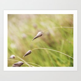 Among the Grass Art Print