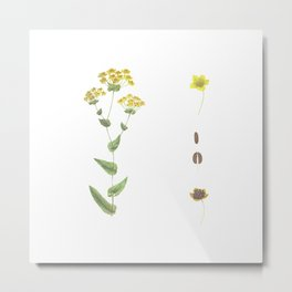 Botanical illustration Metal Print