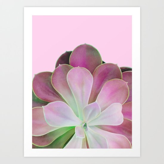 Acid Green and Pink Echeveria Art Print