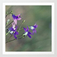 BlueBell Flower Nature Photography  Art Print