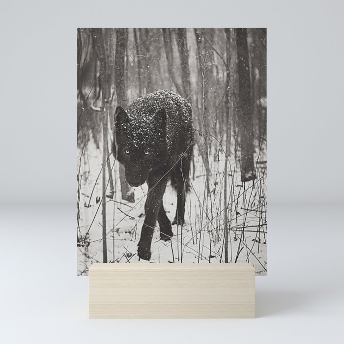 Snow Wolf Mini Art Print