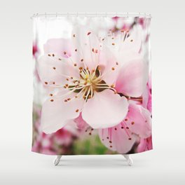 Pink Plum Blossoms Shower Curtain