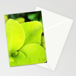 Macro Acid Lime Green Leaves Stationery Cards