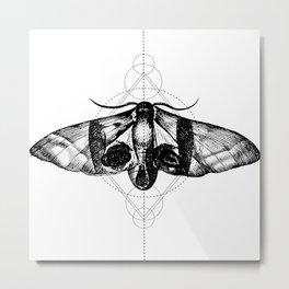 Motte Metal Print