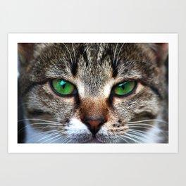Staring Cat Art Print