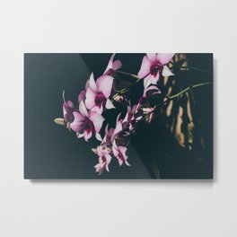 Orchid 1 Metal Print