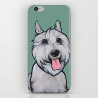 levi iPhone & iPod Skins featuring Levi the Miniature Schnauzer by Pawblo Picasso