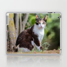 Are you meowing to me? Laptop & iPad Skin
