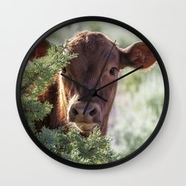 Shy Calf Wall Clock