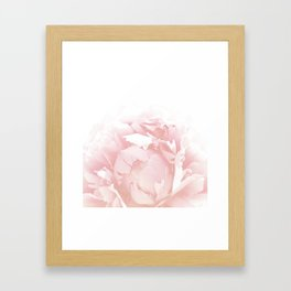 Beautiful Blush Cotton Peony Framed Art Print