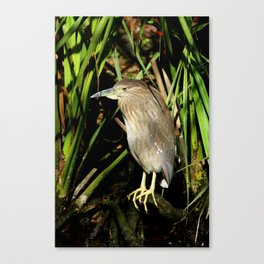 A Young Beauty Canvas Print