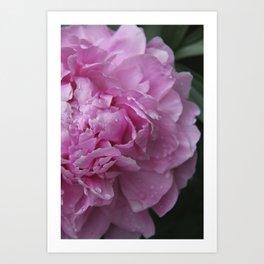 Pink Peony II Art Print