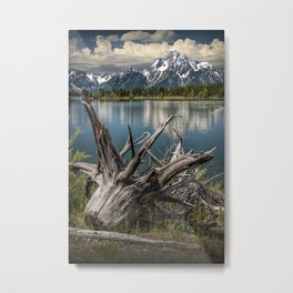 Tree Stump on the Northern Shore of Jackson Lake at Grand Teton National Park Metal Print