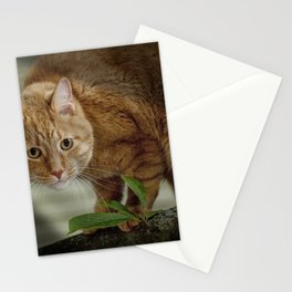 Cat out on a Limb Stationery Cards