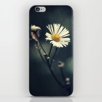 daisy iPhone & iPod Skins featuring Daisy by Pascal Deckarm Fine Art