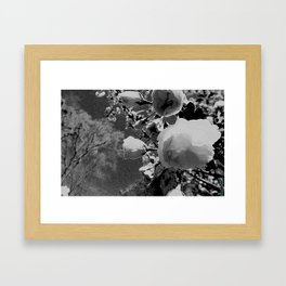 Black and White Flower Framed Art Print