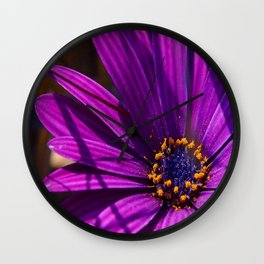 Purple African Daisy Close Up Wall Clock