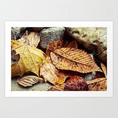 leaves and rocks Art Print