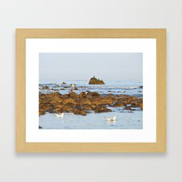 White Island lighthouse Framed Art Print