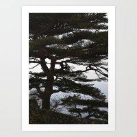 korean Art Prints featuring Korean Trees by Beth Purvis