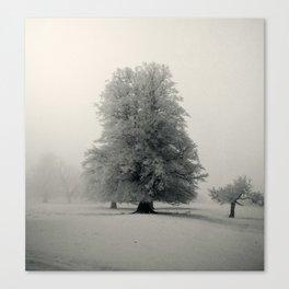White beech Canvas Print