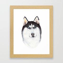 watercolor blue-eyed husky Framed Art Print