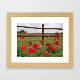 Poppies with Cedar Fence Framed Art Print