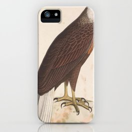 Haliaeetus vociferoides 1849 iPhone Case