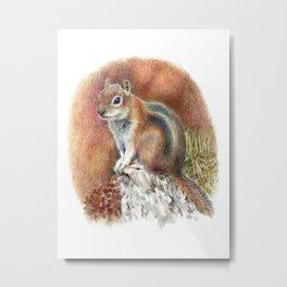 Squirrel Wildlife Art Drawing Metal Print