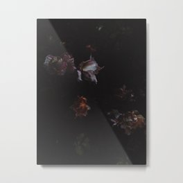 Cold Roses (II) Metal Print