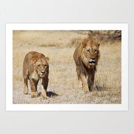 Duo Infernale, Africa wildlife Art Print