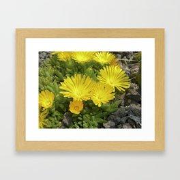 yellow cactus bloom IV Framed Art Print