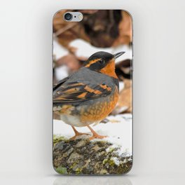 Male Varied Thrush Amid the Snow and Seed iPhone Skin
