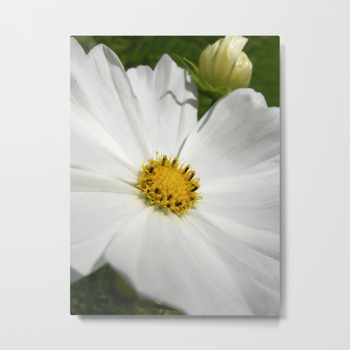 cosmos flower macro XI Metal Print