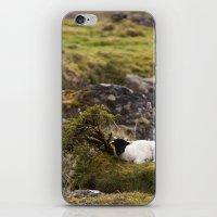 lamb iPhone & iPod Skins featuring Lamb by Aaron MacDougall