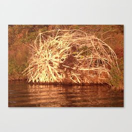 Uprooted Tree Canvas Print