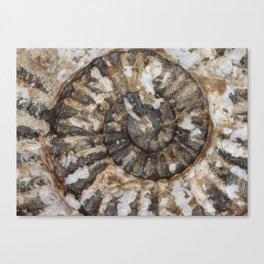 Trilobite Fossil Donegal Canvas Print