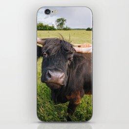Highland Cow - Head Tilt iPhone Skin