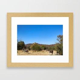 Two Zebras, One Giraffe Framed Art Print