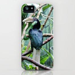 Female Hornbill iPhone Case